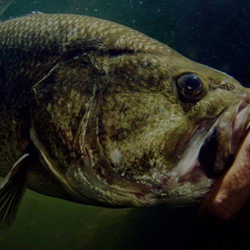 Fishing Season Tips for a Fast Start