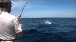 catching the perfect fish