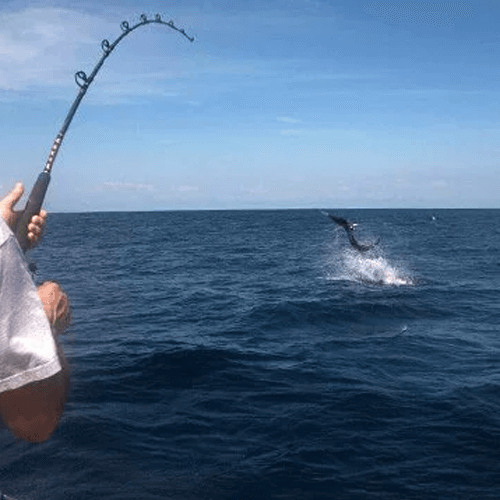 Tips to Catch the Perfect Fish